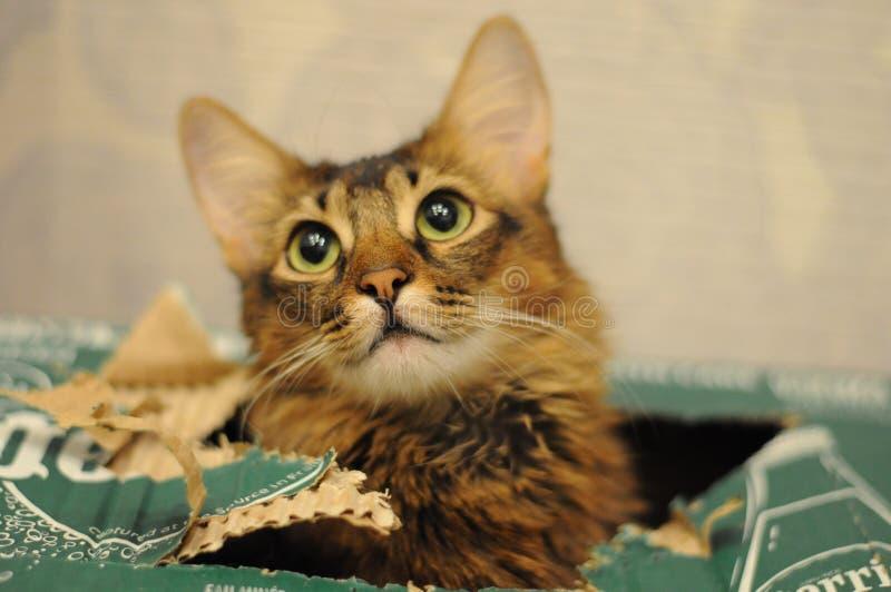Catty Ева стоковые изображения