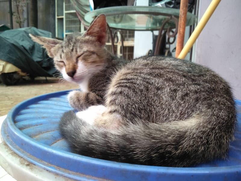Catty 2 стоковое фото
