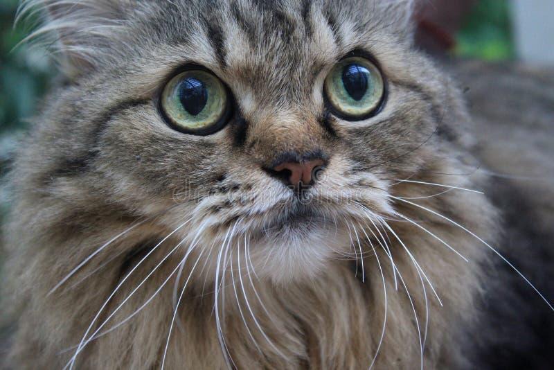 catty стоковое изображение rf