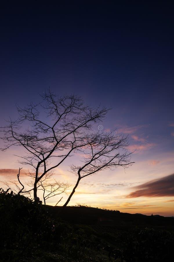 Cau Dat village, Da Lat city, Lam province, Vietnam. Cau Dat tea hill in the sunset, Cau Dat village, Da Lat city, Lam province, Vietnam. With its year-round royalty free stock photo