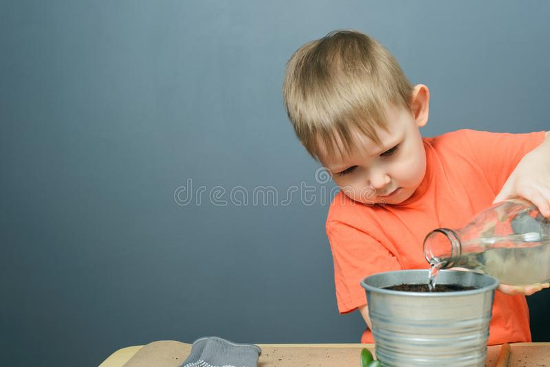 Caucasian blond child boy watering ground for planting money tree plant in metal flower pot royalty free stock image