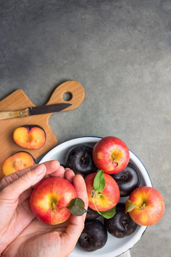 Caucasian kvinnahåll i livligt moget rött äpple för händer med stamgräsplan lämnar mörka plommoner på den vita emaljplattan board arkivfoton