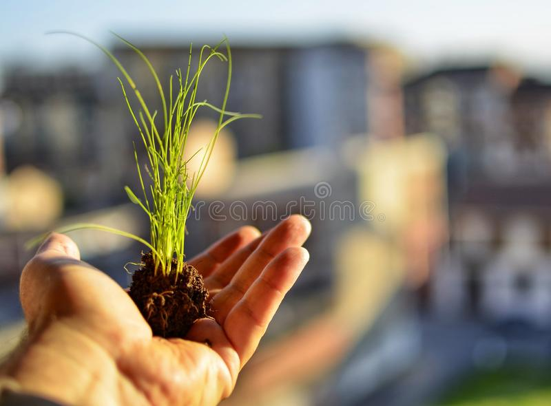 Caucasian man holds a clod of earth with a chive seedling. The hand of the Caucasian man holds a clod of earth with a chive seedling. Selective focus on the stock image