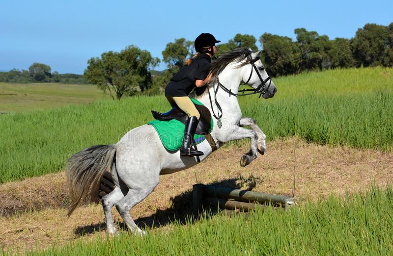 Equestrian eventing team on cross-country track. A Caucasian preteen female rider jumping her gray pony up a bank on a cross country course stock photos