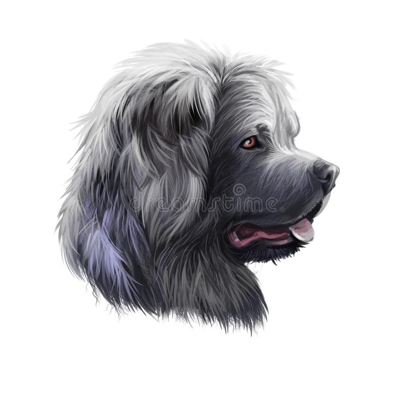Caucasian Shepherd Dog breed isolated on white background digital art illustration. Cute pet hand drawn portrait. Graphic clipart. Design realistic animal vector illustration