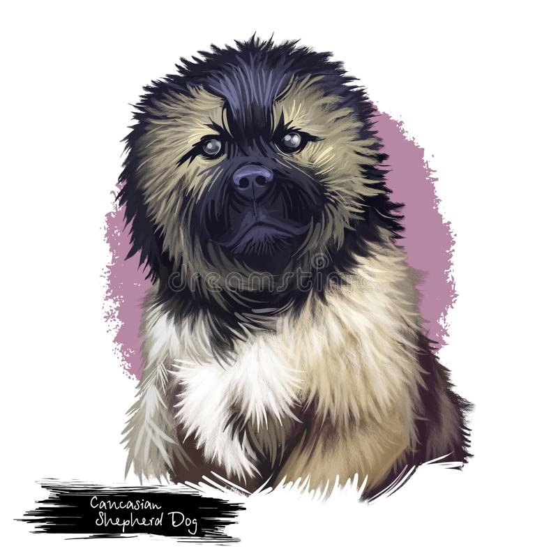Caucasian shepherd dog breed digital art illustration. Caucasian shepherd dog breed portrait of sitting canine mammal with black and brown fur. Russian and royalty free illustration