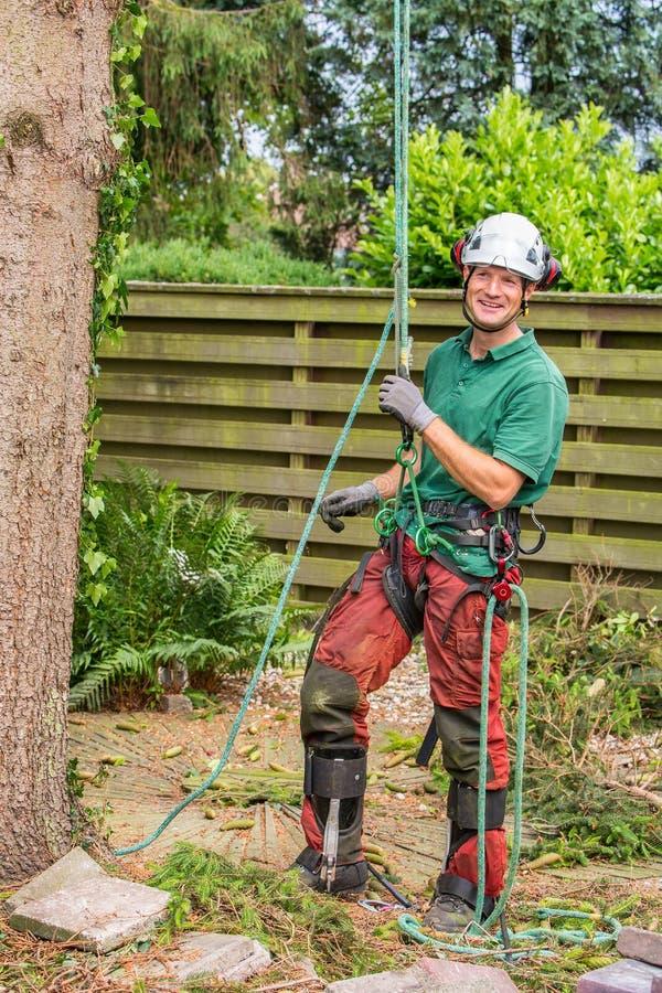 Dutch arborist with climbing equipment in garden stock photo