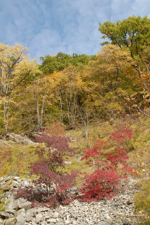 caucasus foothills arkivbild