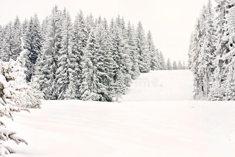 Cauce de la nieve del esquí del bosque del invierno de la montaña imágenes de archivo libres de regalías