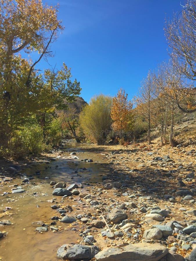 Cauce del río en colores del otoño Río de las montañas del desierto altai Rusia imagen de archivo