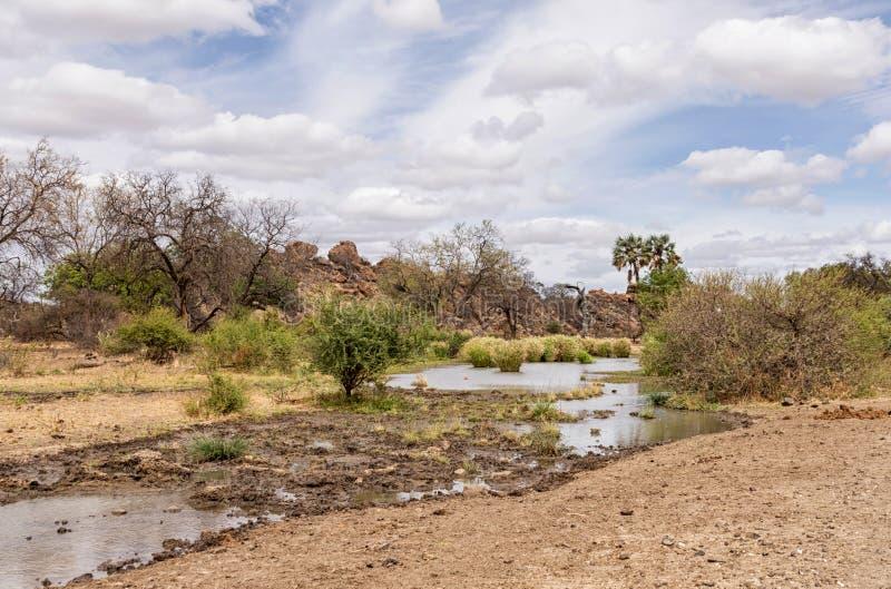 Cauce del río del Limpopo fotografía de archivo