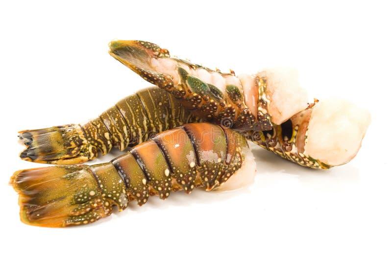 Cauda de lagosta foto de stock royalty free