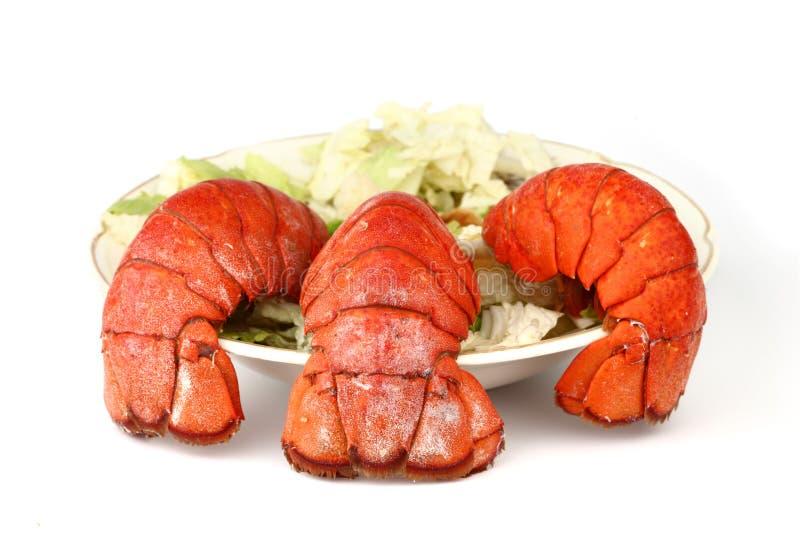 Cauda de lagosta foto de stock