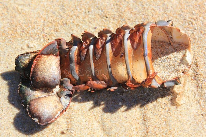 Cauda de lagosta vazia imagem de stock