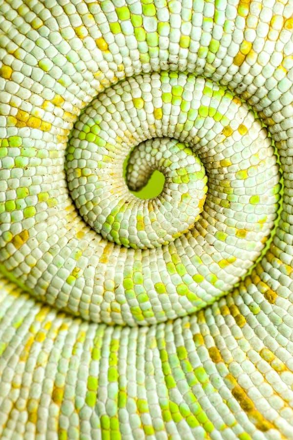 Cauda do Chameleon imagens de stock royalty free