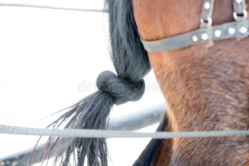 a cauda do preto do cavalo atou imagem de stock royalty free