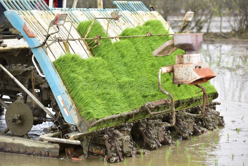 Cauda do transporte-plantador do arroz fotos de stock
