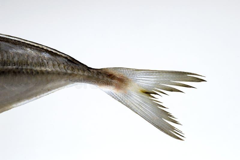 Cauda dos peixes imagem de stock