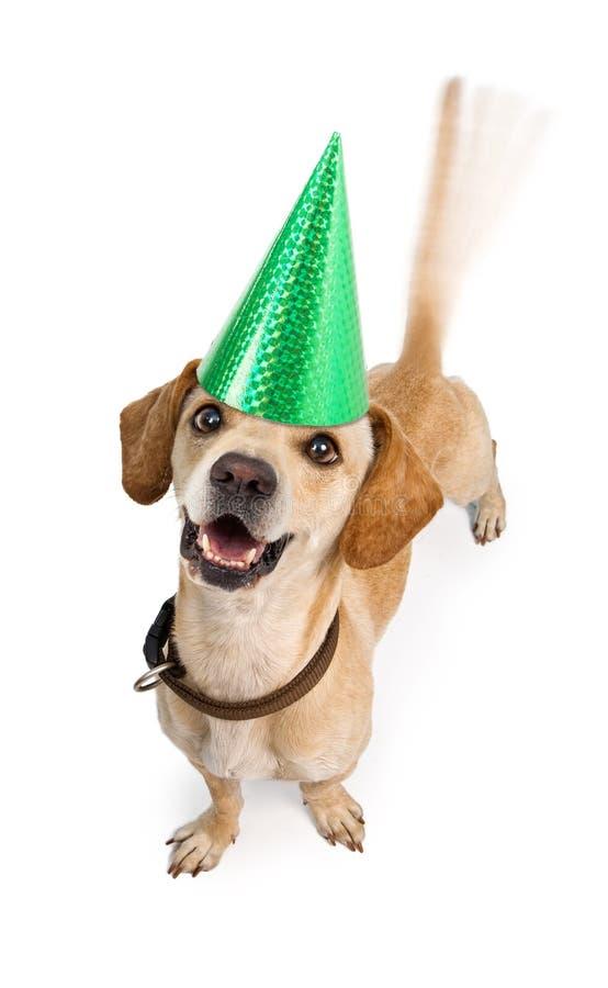 Cauda sacudindo do cão do feliz aniversario fotos de stock royalty free