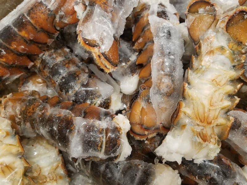 Caudas de lagosta congeladas fotografia de stock royalty free