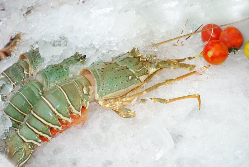Caudas de lagosta cruas fotografia de stock