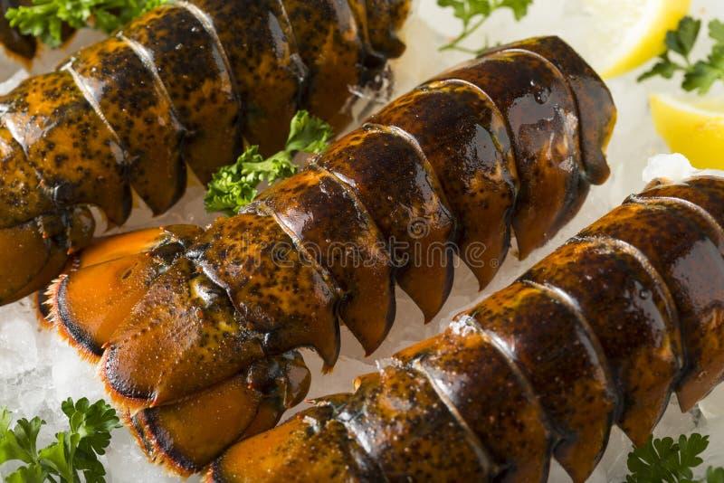 Caudas de lagosta frescas orgânicas cruas fotos de stock royalty free