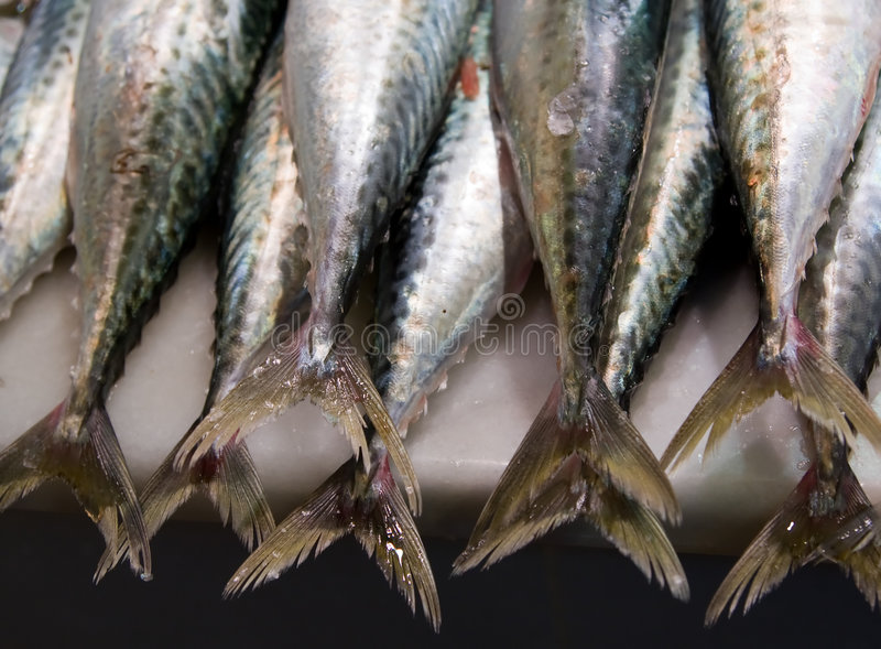 Caudas dos peixes foto de stock royalty free