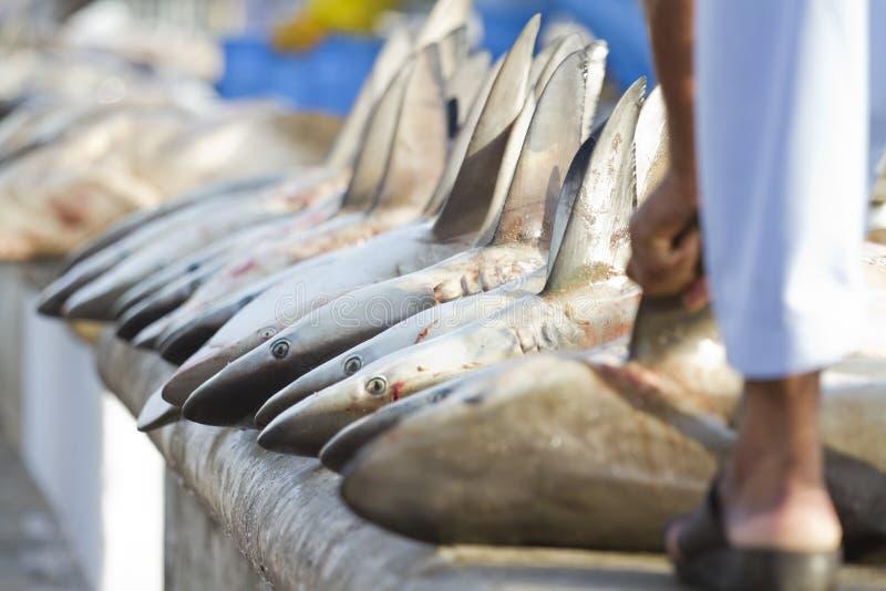 Caudas dos tubarões em um mercado de peixes, Dubai, UAE fotografia de stock
