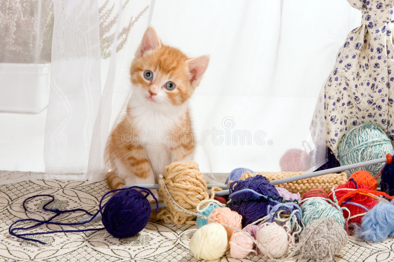 Caught with wool stock photos