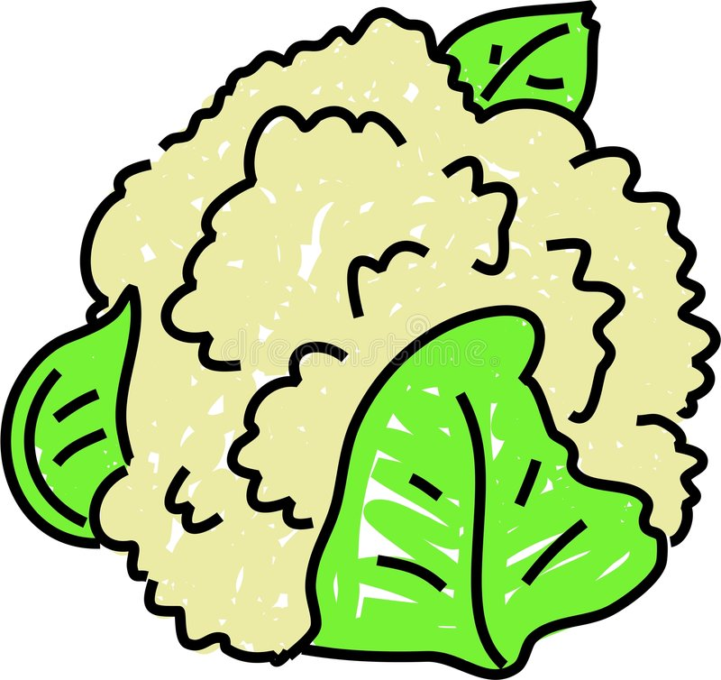 Cauliflower. Isolated on white drawn in toddler art style vector illustration
