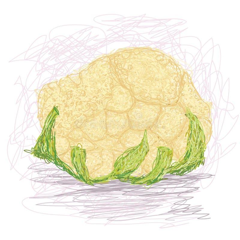 Cauliflower. Closeup illustration of a fresh cauliflower vegetable royalty free illustration