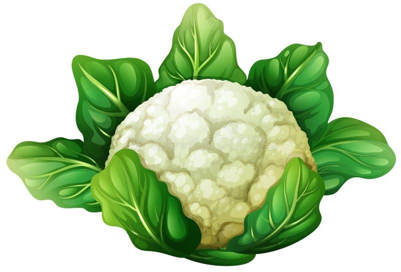 Cauliflower with green leaves. Illustration stock illustration