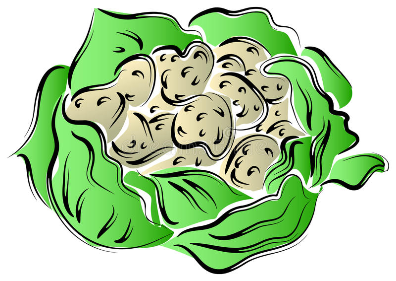 Cauliflower. Line art brush stroke image of cauliflower stock illustration