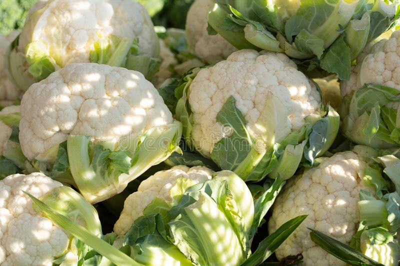 Cauliflower  at a local market royalty free stock images