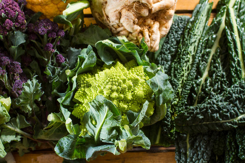 Cauliflowers and cabbages. Cornucopia of vegetables from the brassicaceae family: purple sprouting broccoli, swede, black cabbage, with focus on Romanesco royalty free stock image