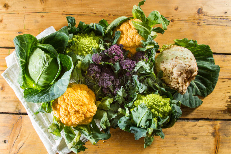 Cauliflowers and cabbages. Cornucopia of vegetables from the brassicaceae family: yellow cauliflower, purple sprouting broccoli, cabbage, swede, Romanesco royalty free stock photos