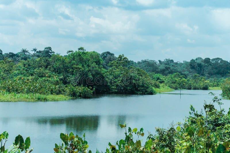 Causa do rio no meio da selva das Amazonas imagens de stock royalty free