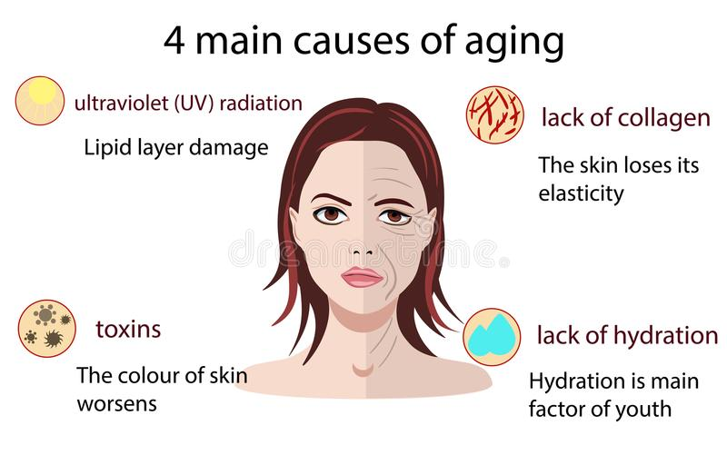 Causes of aging, vector illustration isolated on the white background. Causes of aging, vector illustration aging process and small pictures isolated on the royalty free illustration