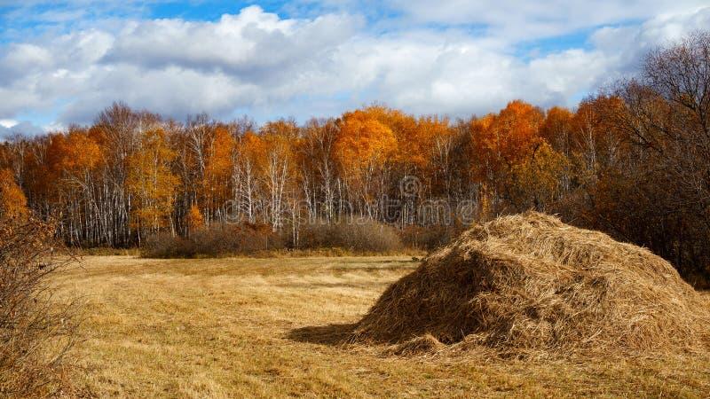 Caution de foin moissonnant dans le paysage d'or de champ image libre de droits