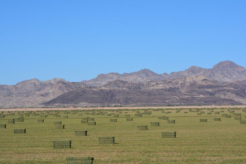 Cauzioni del fieno vicino al fiume Colorado immagine stock libera da diritti