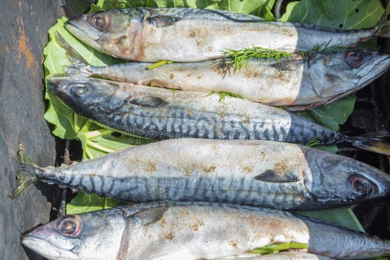 Cavala inteira fresca Cozimento de peixes fumados quentes fotografia de stock royalty free