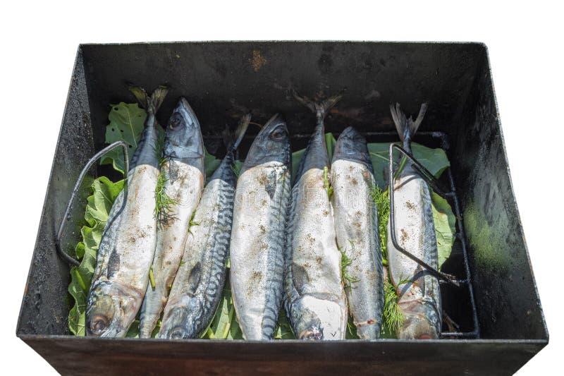 Cavala inteira fresca dos peixes com cabeças Preparação dos peixes para fumar Isolado no fundo branco foto de stock