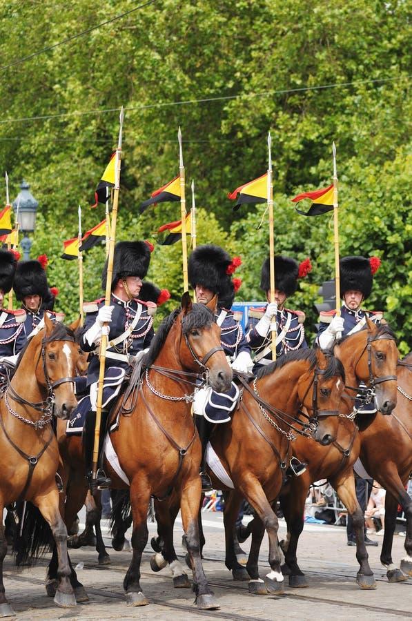 Cavalaria belga imagem de stock royalty free