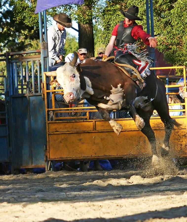 Cavaleiro 1 de Bull fotografia de stock royalty free