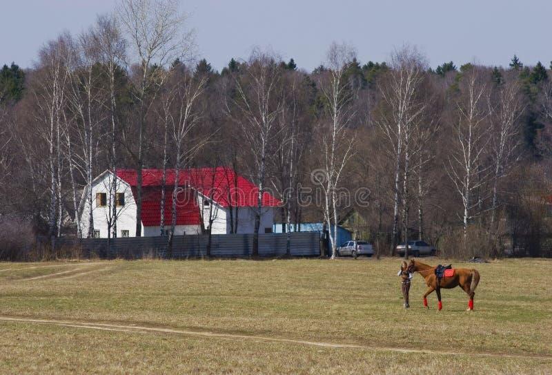 Cavaleiro com cavalo fotos de stock royalty free