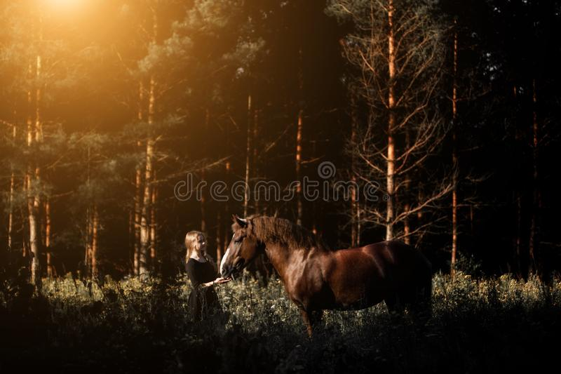 Cavaleiro da jovem mulher com seu cavalo na luz do por do sol da noite foto de stock
