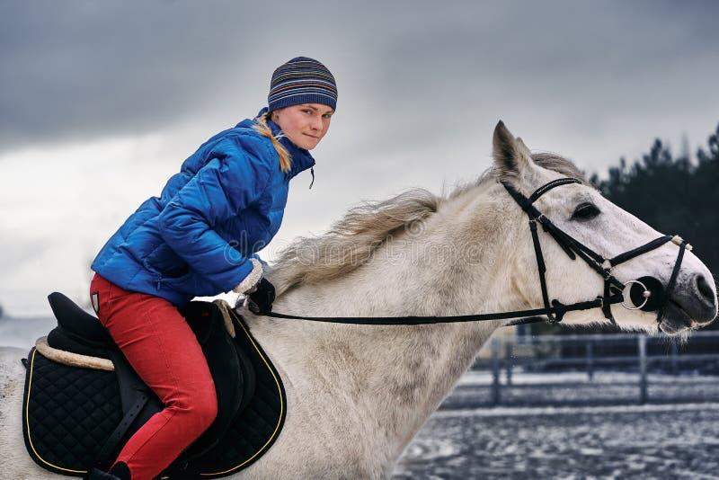 Cavaleiro da jovem mulher em um blazer azul e em ostentar um tampão para uma caminhada em um cavalo branco em um dia de inverno n imagens de stock