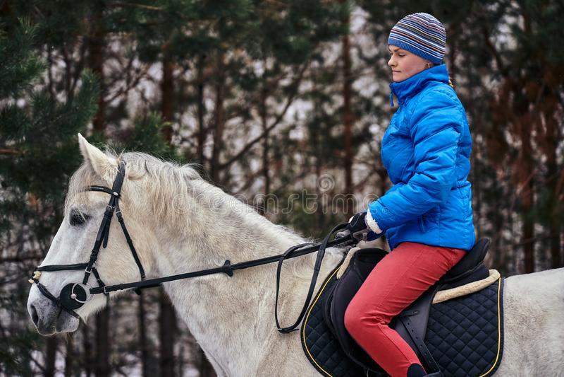 Cavaleiro da jovem mulher em um blazer azul e em ostentar um tamp?o para uma caminhada em um cavalo branco fotos de stock royalty free