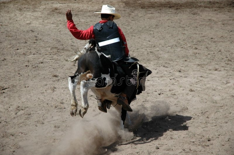 Cavaleiro da vitela foto de stock royalty free