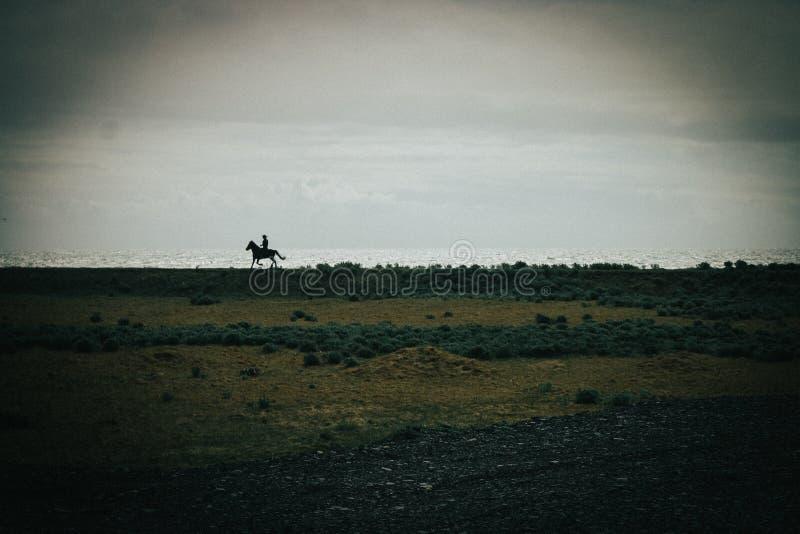 Cavaleiro de horseback islandês na praia preta da areia fotografia de stock